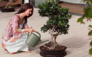Толстянка денежное дерево лечебные свойства