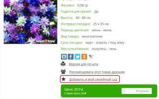 Диерама – род многолетних растений. Диерама прекраснейшая: фото видов и сортов растения с описаниями