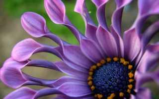 Как выглядят цветы