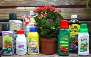 Чем поливать цветы для обильного цветения