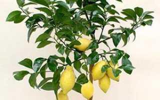 Как сажать лимон