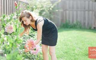 Как ухаживать за георгинами в саду