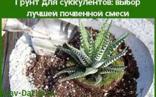 Почва для суккулентов