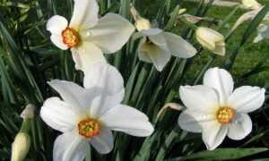 Маленькие белые цветочки