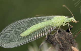Зеленые мошки