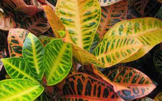 Комнатные растения уход