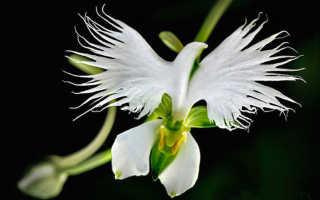 Цветы похожие на орхидеи