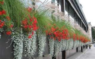 Ампельные растения для сада