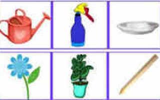 Как правильно ухаживать за цветами