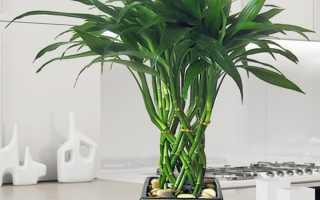 Бамбук спираль