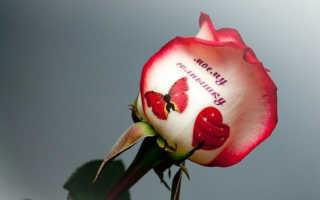 Язык цветов в наклейках: говорящие цветы на фото и наклейки на цветы