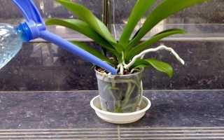 Как использовать янтарную кислоту для комнатных растений