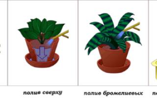 Как поливать комнатные растения