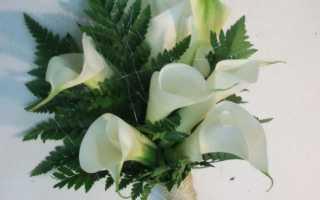 Желтые каллы на фото. Значение цветка в букетах – что символизируют желтые каллы.