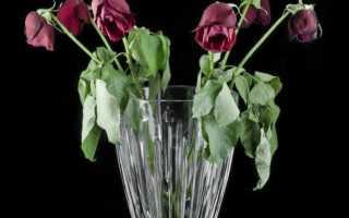 Как срезанную розу укоренить