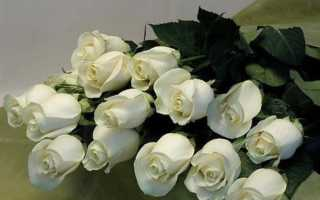 Что означают белые розы