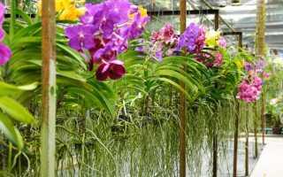 Как обрезать корни у орхидеи