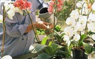Полив орхидей в домашних