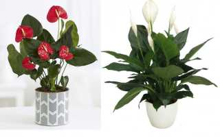Мужское и женское счастье цветы