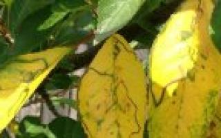 Удобрения в домашних условиях для комнатных растений