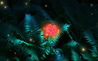 Как выглядит цветок папоротника