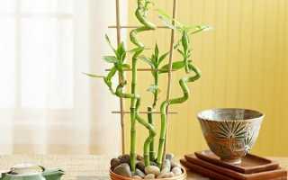 Вазон бамбук