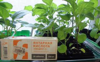 Для чего нужна янтарная кислота растениям