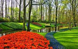 Когда цветут тюльпаны