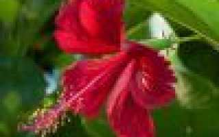 Цветы смерти