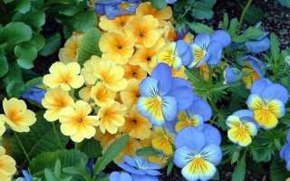Комнатные растения по знаку зодиака