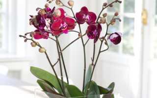 Орхидея в стеклянной вазе