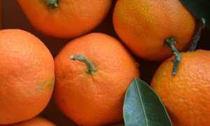 Мандарин это фрукт или ягода