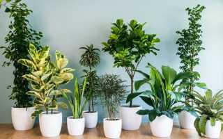 Какие комнатные растения