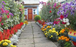 Как красиво посадить