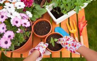 Как посадить цветок в горшок дома