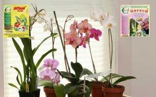Как применять эпин для орхидей