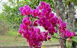 Как выглядит орхидея